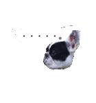 吹き出しフレンチブルドッグのココ(個別スタンプ:12)