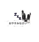 吹き出しフレンチブルドッグのココ(個別スタンプ:14)