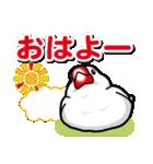 文鳥横丁(個別スタンプ:01)