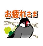文鳥横丁(個別スタンプ:15)