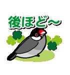 文鳥横丁(個別スタンプ:40)