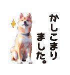 【柴犬写真】よく使う返事とあいさつ(個別スタンプ:07)