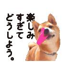 【柴犬写真】よく使う返事とあいさつ(個別スタンプ:35)