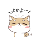 博多弁のしばいぬ(個別スタンプ:01)