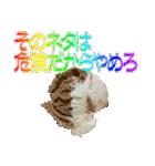 語るアイスクリーム01(個別スタンプ:34)