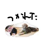 ガジュマル と フクマル(個別スタンプ:27)