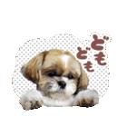 シーズー犬ぽんずとかぼす【よく使う編】(個別スタンプ:05)