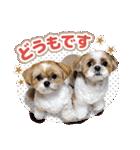 シーズー犬ぽんずとかぼす【よく使う編】(個別スタンプ:06)