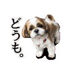 シーズー犬ぽんずとかぼす【よく使う編】(個別スタンプ:07)