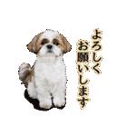 シーズー犬ぽんずとかぼす【よく使う編】(個別スタンプ:10)
