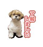 シーズー犬ぽんずとかぼす【よく使う編】(個別スタンプ:14)