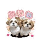 シーズー犬ぽんずとかぼす【よく使う編】(個別スタンプ:16)