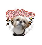 シーズー犬ぽんずとかぼす【よく使う編】(個別スタンプ:27)