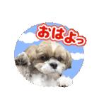 シーズー犬ぽんずとかぼす【よく使う編】(個別スタンプ:28)