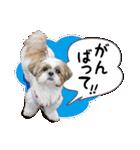 シーズー犬ぽんずとかぼす【よく使う編】(個別スタンプ:35)