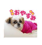 シーズー犬ぽんずとかぼす【よく使う編】(個別スタンプ:37)