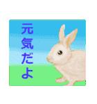 ウサギさんのスタンプ(個別スタンプ:03)