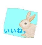 ウサギさんのスタンプ(個別スタンプ:06)