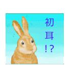 ウサギさんのスタンプ(個別スタンプ:13)