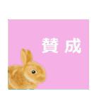 ウサギさんのスタンプ(個別スタンプ:16)