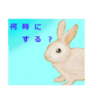 ウサギさんのスタンプ(個別スタンプ:17)