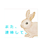 ウサギさんのスタンプ(個別スタンプ:30)