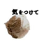 語るアイスクリーム02(個別スタンプ:33)