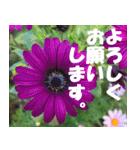 花のスタンプ 4(個別スタンプ:1)