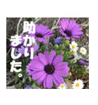 花のスタンプ 4(個別スタンプ:2)