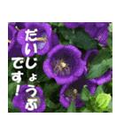 花のスタンプ 4(個別スタンプ:4)