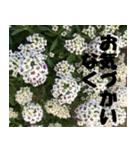 花のスタンプ 4(個別スタンプ:5)