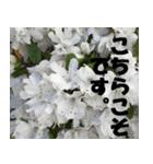 花のスタンプ 4(個別スタンプ:6)