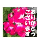 花のスタンプ 4(個別スタンプ:7)