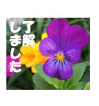 花のスタンプ 4(個別スタンプ:9)