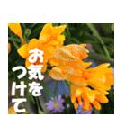 花のスタンプ 4(個別スタンプ:10)
