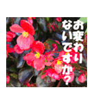 花のスタンプ 4(個別スタンプ:11)
