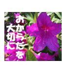 花のスタンプ 4(個別スタンプ:13)