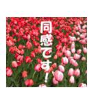 花のスタンプ 4(個別スタンプ:14)