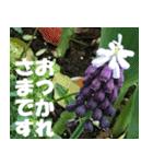 花のスタンプ 4(個別スタンプ:16)