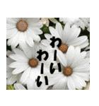 花のスタンプ 4(個別スタンプ:17)