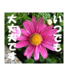 花のスタンプ 4(個別スタンプ:18)
