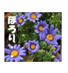 花のスタンプ 4(個別スタンプ:19)