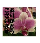花のスタンプ 4(個別スタンプ:20)