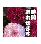 花のスタンプ 4(個別スタンプ:21)