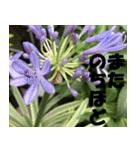 花のスタンプ 4(個別スタンプ:23)