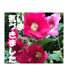 花のスタンプ 4(個別スタンプ:24)