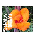花のスタンプ 4(個別スタンプ:25)
