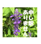 花のスタンプ 4(個別スタンプ:26)