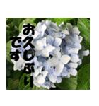 花のスタンプ 4(個別スタンプ:27)