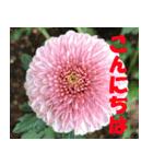 花のスタンプ 4(個別スタンプ:28)
